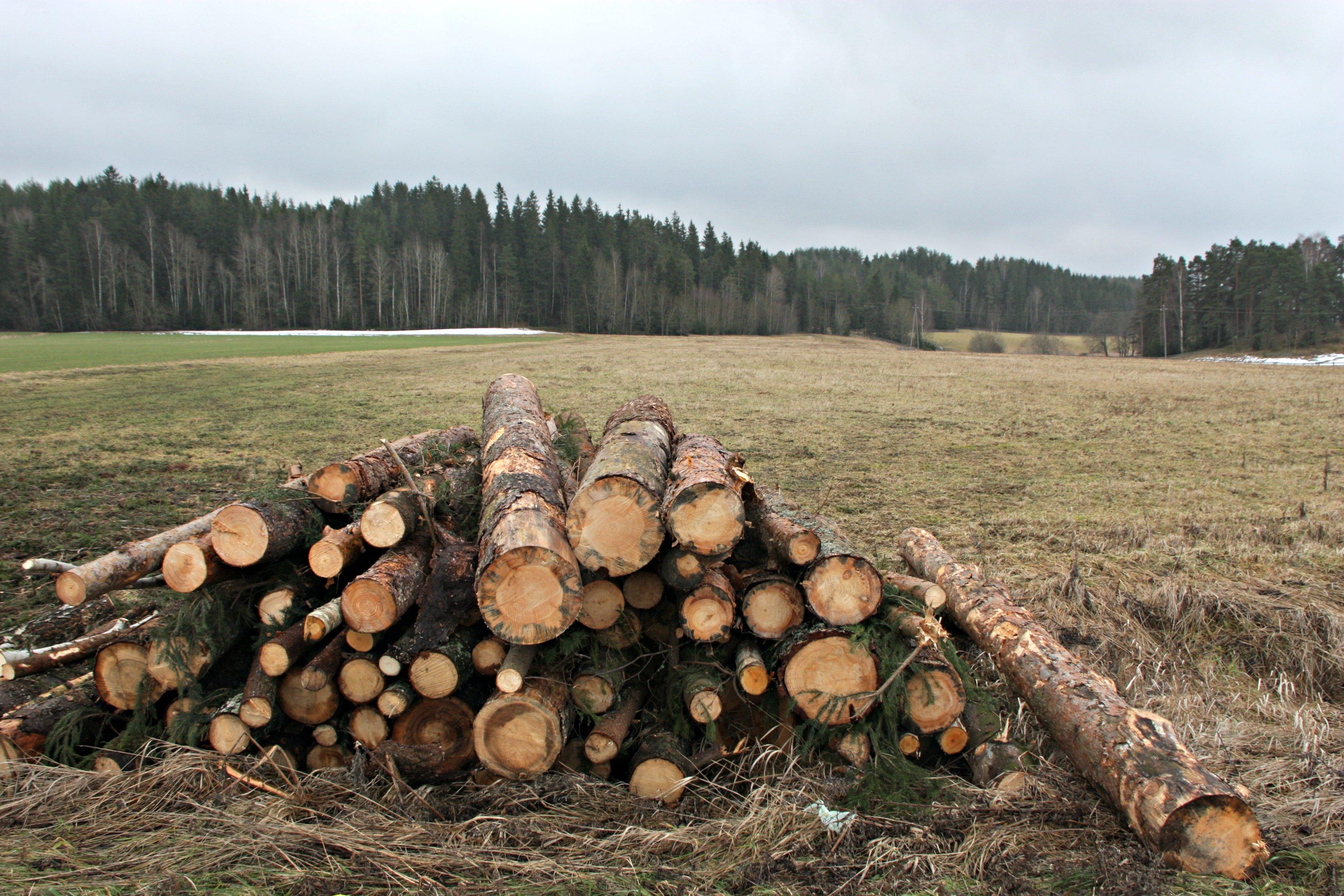 que-es-el-transporte-de-productos-forestales